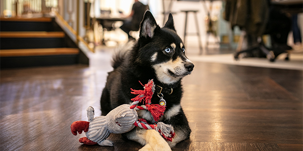 Bring Your Dog to Work Day (25 June): The Rise of the Four-Legged Colleague Image